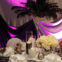 Party Rental Linens Online Add More Fun to Your Event
